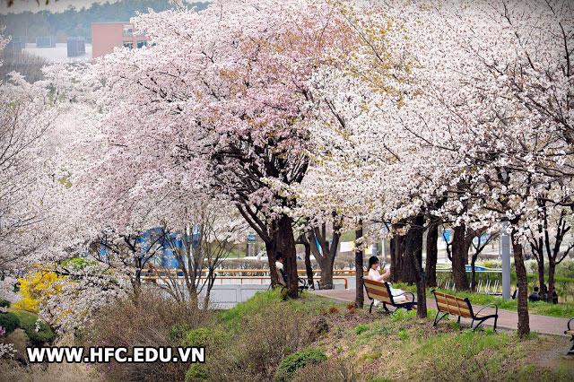 Điều kiện du học Hàn Quốc 2019Điều kiện du học Hàn Quốc 2019